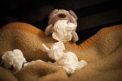 06.12.12: Erkltung nervt (Wang Wang 22) Tags: dog cute nikon pug plush hund 365 nici pictureoftheday mops d90 fotodestages wangwang wangwang22
