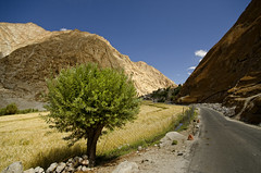 Himya Village. (Prabhu B Doss) Tags: travel india landscape photography nikon village sigma wideangle leh 1020 himalayas hamlet ladakh upshi chumathang prabhub prabhubdoss d7000 himya zerommphotography 0mmphotography