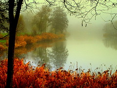 the foggy pond (mujepa) Tags: autumn trees fog automne reeds pond arbres celebrities brouillard roseaux brume tang joncs photographyforrecreation celebritiesofphotographyforrecreation mistrushes celebritiesphotographyforrecreation