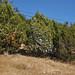 2012_Loop_360_Trees_134