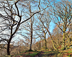 Trees: Colden Valley November 2012 (phil openshaw) Tags: trees winter england landscape yorkshire hebdenbridge heptonstall coldenvalley philopenshaw