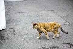 Today's Cat@2016-07-17 (masatsu) Tags: cat pentax catspotting mx1 thebiggestgroupwithonlycats