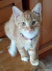 Wed, Jul 20th, 2016 Found Female Cat - Main Road, Tallaght, Dublin 24 (Lost and Found Pets Ireland) Tags: foundcatmainroaddublin found cat main road dublin july 2016