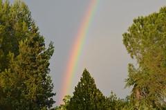 Somewhere over the rainbow (dfromonteil) Tags: arcenciel rainbow storm orage rain pluie light trees arbres colors couleurs