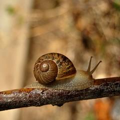 Viaggiando (giuseppemontalto) Tags: snail lumaca photo photography fotografia focus messaafuoco travel travelling viaggio viaggiando
