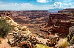 Celebrate Our National Parks - Canyonlands - Explore (Ron Drew) Tags: nikon d800 canyonlandsnationalpark islandsinthesky utah moab desert mesa butt clouds dappledlight mountains coloradoplateau erosion nationalpark park pinyonpine juniper