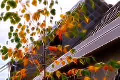L'arme cache la maison (philippejeanne) Tags: maison habitation weekend abandonne arbre nature feuille fenetre vue cacher masquer ardoise toit