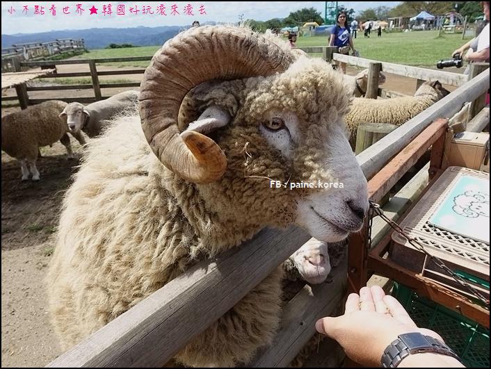 木更津母親牧場 (55).JPG