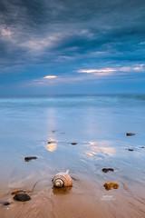 Shell On The Beach (Dapixara) Tags: morning waves seashell ocean nauset cloudscape longexposure beach shell sunrise massachusetts usa