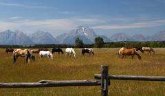 IMG_6928 Horses and Teton Range (cmsheehyjr) Tags: cmsheehy colemansheehy tetons tetonrange mountmoran grandtetonnationalpark wyoming horses