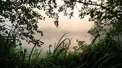 Heart's Content (Mark BJ) Tags: daisynook countrypark manchester uk oldham failsworth swan haze mist morning sunrise crimelake tree canopy leaves grass sun reflection fishingplatform branch