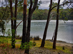 Lakeside I (elphweb) Tags: hdr highdynamicrange lake lakeside waterway trees tree forest bush australia nsw water coastal