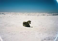 (Nikolay Kulivets) Tags: 35mm film olympusmjuii mjuii kodak georgia clouds dog caucasus kazbek landscape alpinism mountain snow
