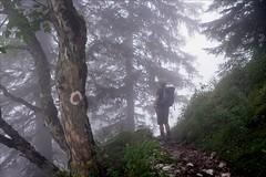 durch den Nebel - through the fog (Heinrich Plum) Tags: heinrichplum plum fuji xe2 xf1855mm nebel fog untersberg salzburgerland salzburg austria sterreich berg berge mountain mountains mountaineering wegweiser signpost hiking wandern wanderung alpen alps berchtesgadeneralpen reitsteig