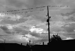 Life Through Light & Shadow~ (K.Chris ~AlwaYs LeaRning~) Tags: blackandwhite light shadow life nature birds dusk evening night
