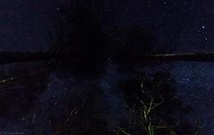 Dark Matter (jyrki huusko) Tags: night sky stars trees outdoors september autumn