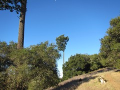 Twin Trees and Mogli (comma?) Tags: california californiahills morninghike californiaautumn californiamountains mountainhiking