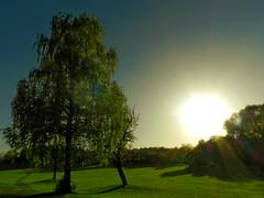 Low-lying Sun (*Gitpix*) Tags: park autumn trees sky sun tree nature grass landscape nikon low herbst natur meadow wiese himmel coolpix gras sunrays landschaft sonne bume baum sonnenstrahlen rasen lowlying tiefstehend