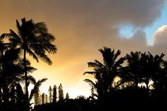 Palms & Afternoon Clouds (Mark A. Morgan, Off Again to New Mexico!) Tags: kauai sunrises hanalei taro princeville haena napalicoast wetcave hanakapiai tunnelsbeach powerlinetrail hanakapiaifalls haenakauai kapalautrail beachkapaaopaekaa fallswailua fallslee reynoldsanemone fungusorchidskauai sunsetskauai