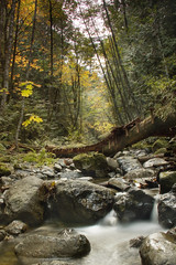 Random Trails (Derek_Flynn) Tags: trees fall nature wet water leaves bike creek outdoors rocks colours hiking path exploring platform peaceful trail riding creation adventures shrubs