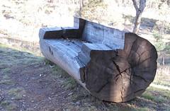 Even enough wood for a bench (spelio) Tags: nature rural landscape bush flat australia canberra jul bikeride act 2012 g12 mulligans australiancapitalterritory mulligansflat