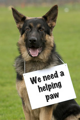 A Helping Paw (Greater Manchester Police) Tags: dog dogs rottweiler germanshepherd gmp appeal policedogs greatermanchesterpolice
