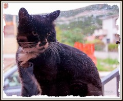 E fuori piove (RoLiXiA) Tags: sardegna glass rain cat chat sardinia felino pioggia gatto bosa vetro micio feliscatus gattoeuropeo nikond90 planargia srdaigne