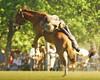 El triunfo del bagual (Eduardo Amorim) Tags: horses horse southamerica argentina caballo cheval caballos cavalos pferde cavalli cavallo cavalo gauchos pferd pampa hest hevonen chevaux paard gaucho 馬 américadosul häst gaúcho 말 campero amériquedusud provinciadebuenosaires лошадь gaúchos 马 sudamérica sanantoniodeareco suramérica américadelsur סוס areco südamerika jineteada حصان άλογο pampaargentina camperos americadelsud gineteada ม้า americameridionale campeiros campeiro eduardoamorim iayayam yamaiay pampaargentino ঘোড়া