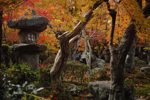 京都一乗寺圓光寺 Enkouji Temple, Ichijyo-ji, Kyoto, Japan
