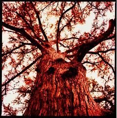 //// /////// /// / //// (David Adam Salinas) Tags: camping trees 120 film nature analog crossprocessed filters garnerstatepark hasselblad500cm proxar homeprocessed davidsalinas 80mm28distagonzeiss