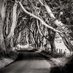 the dark hedges - northern ireland - black & white (laughlinc) Tags: road trees vanishingpoint blackwhite country northernireland pointandshoot lr4 canonpowershotsd630 darkhedges thedarkhedges thechallengefactory laughlinc