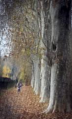 dipinto d'autunno (Bella-ChiChi) Tags: sognidreams