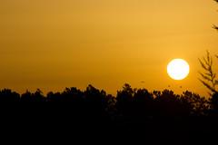 Portuguese Sunset (AJ Cooper) Tags: trees sunset sun black portugal yellow contrast lagos