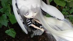 Dal Tina (Jen-Jen~) Tags: doll dal tina pullip