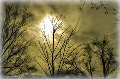 le soleil et les arbres hiver (Bets<3 Fine Artist ~Picturing Light ~ Blessings ~~) Tags: macro art love painting photography freedom landscapes seascapes drawing traditional joy fine atlantic changing healing