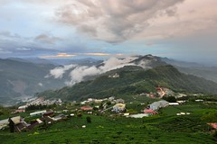 Tea field  (Vincent_Ting) Tags: sunset sky clouds taiwan  formosa  jiayi   seaofclouds alisan    teafield