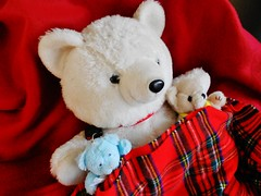 Snowy's family Snuggle up! (Cathlon) Tags: bear family red white wool smile fun toy happy three cozy teddy snowy s blankets cosy snuggled 25yrs odc2 scavenger14 ourdailychallenge dec2012 scavchal2 ansh40 flickrloungemonthlytheme nogoldilocks
