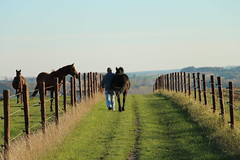 Walk The Line (The*World*Through*My*Eyes) Tags: horses panorama horse green nature grass boer landscape groen path walk horizon natuur bluesky walkway gras farmer barbwire prikkeldraad wandeling paard kessello pellenberg endlesswalk trolieberg paardenboer
