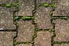Mossy Maze  337-366 #3 (Samyra Serin) Tags: france 50mm europe pentax pavement gimp potd cobblestones drago 2012 year3 valdemarne aphotoaday alfortville day337 project365 fattal qtpfsgui samyras pentaxasmc50mmf17 k200d mantiuk06 shuttercal reinhard05 day1067 luminancehdr mantiuk08 samyraserin samyra008 noscreenchallenge