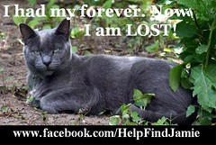 Now I am lost (Jamie's Team) Tags: cat lost lostcat wwwfacebookcomhelpfindjamie