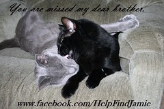 You Are Missed My Dear Brother (Jamie's Team) Tags: cat lost lostcat wwwfacebookcomhelpfindjamie