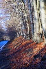 A68 020 (NikWatt) Tags: trees leaves weather scotland sony sigma handheld roads polarisers cokin a68 sigma18200 sonya580