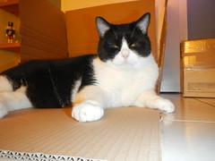 What'she want? (Ottmar H.) Tags: cat chat gato katze macska  kater  tomcat