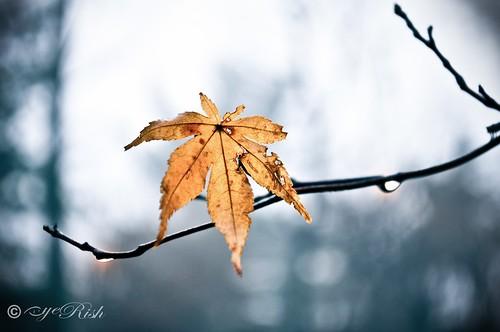 Leaf-Morning Dew-02