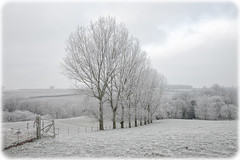 Frosty Morning (mark galer) Tags: ice frost country freeze fields herefordshire a99