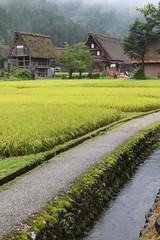 Shirakawa-go views (10b travelling / Carsten ten Brink) Tags: japan asia takayama 2012 carstentenbrink landscape rice paddy nihon nippon eastasia honshu shirakawago field architecture