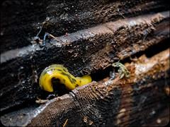 Slug (adolgov) Tags: california mendocino ocean pacificcoasthighway pch pacificocean