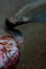 Vogel_011.jpg (greiner_max) Tags: bird america2016 hoglezoo object america animal places saltlakecity animals destinations genre objekt ortschaften tier tiere