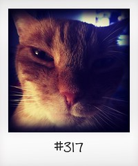 """#DailyPolaroid of 10-8-16 #317 • <a style=""""font-size:0.8em;"""" href=""""http://www.flickr.com/photos/47939785@N05/29057233353/"""" target=""""_blank"""">View on Flickr</a>"""