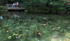 """Monet (Monet) """"Water Lilies"""" Nokton10.5mmf0.95 (gotto510) Tags: french painter claude monet japan japo japon japn photo photos"""